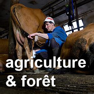 traite de vaches tarines à Puygros - famille Mongellaz - Bauges - Savoie